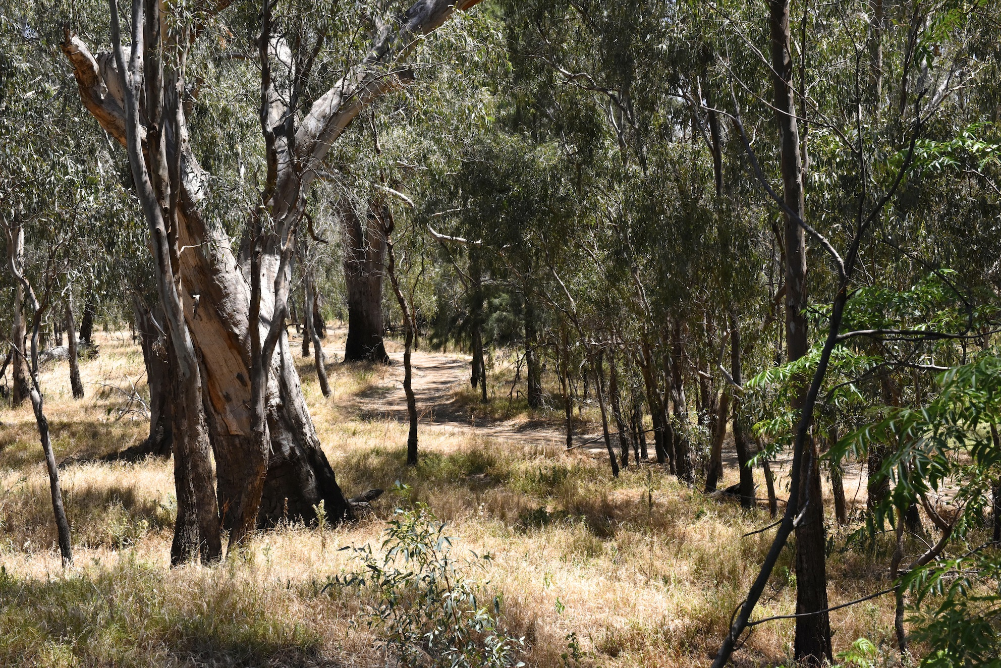 View of the walking track along the Murrumbidgee river from Tulluc